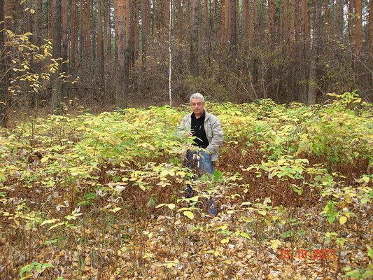 Фото мужчины Владимир, Екатеринбург, Россия, 61